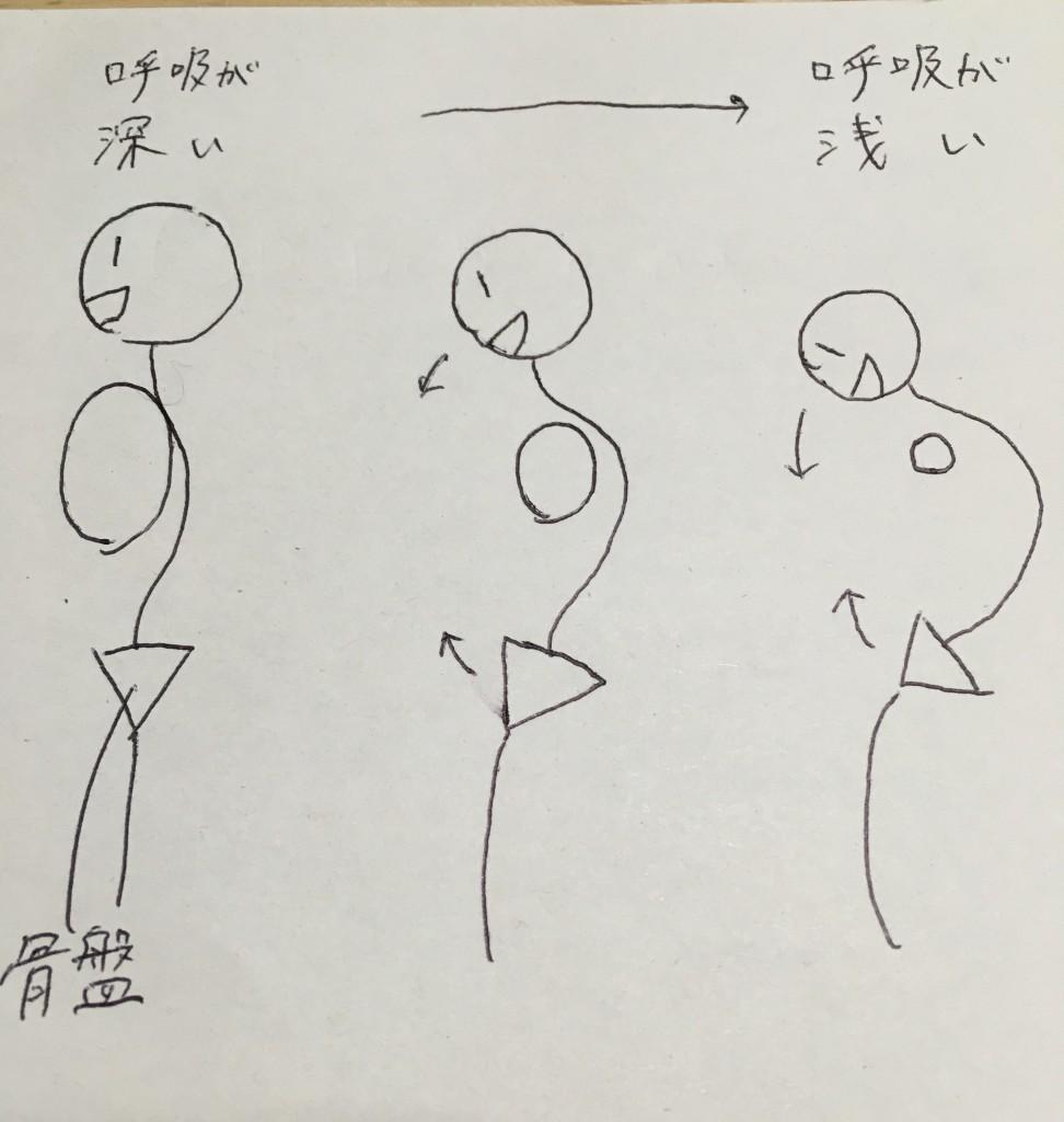 普段の呼吸が浅くなると、姿勢は丸まってきます